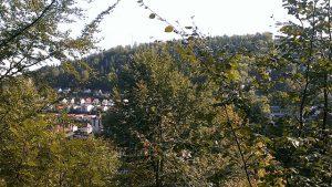 Wald und Ort Triberg