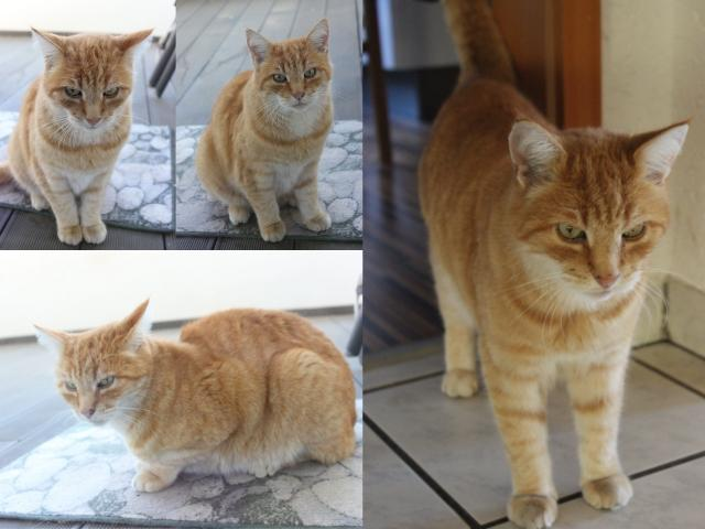 Collage Kater Asterix